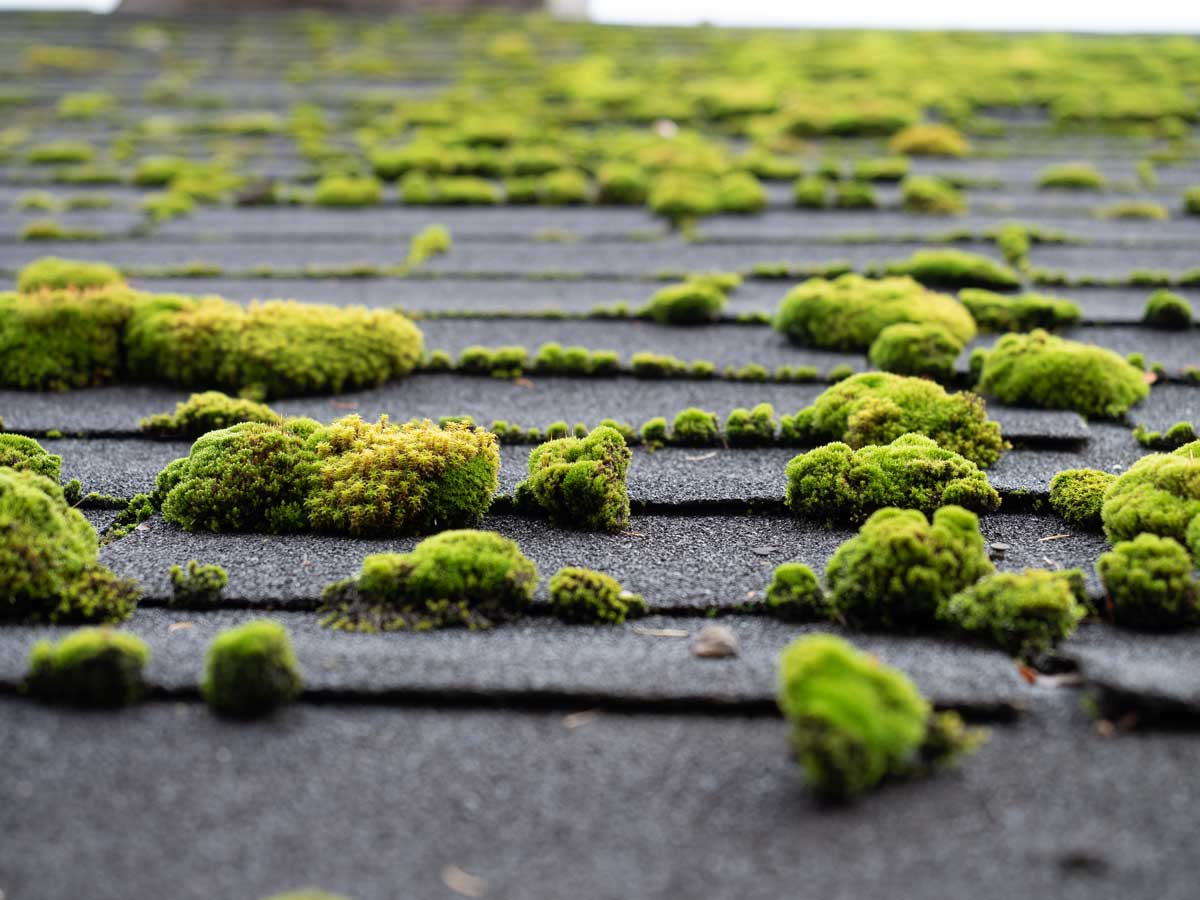 moss cleaning 01